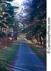 Long road through forest in Berkshire - Long road through...