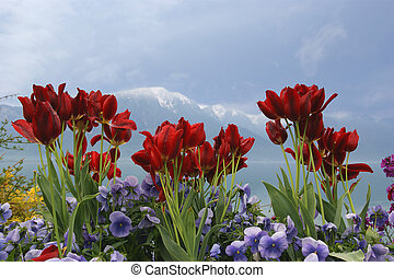 Tulips and poppies on a background of sky, lake and...