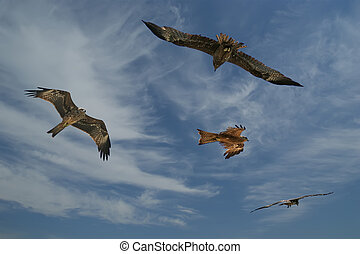 Falcons fly against the blue sky