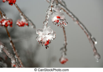 Frozen fruits red rowan ice closeup