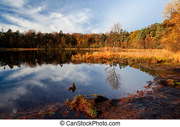 early morning light on forest pond - wild pond in autumn...