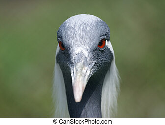 The large image of a  stork