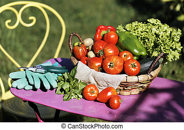 some fresh vegetables in garden