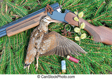 Woodcock with hunting attributes on the background of fir...