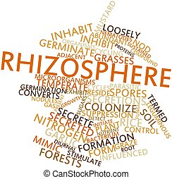 Rhizosphere - Abstract word cloud for Rhizosphere with...