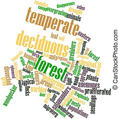 Temperate deciduous forest - Abstract word cloud for...