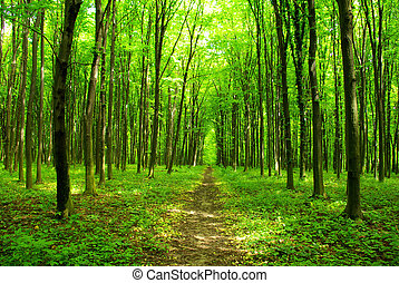 forest path - a path is in the green forest