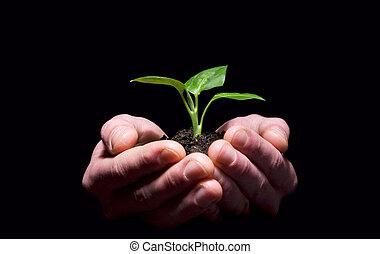 土壤, 樹苗, 藏品, 手