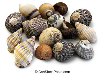 Sea shells - Collection of sea shells on a white background