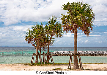 Okinawa Beach - Screwpines aka Adan tree on the left and...