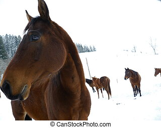 snow horse winter - horses out side at cold winter time