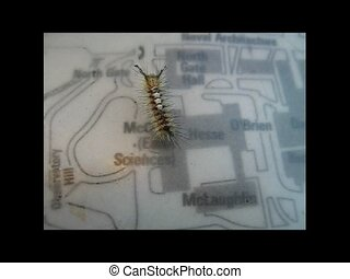 Young Mr. Caterpillar goes to Cal - A caterpillar walks...