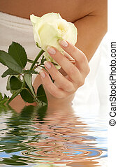 rosebud - beautiful woman hand with rosebud in water