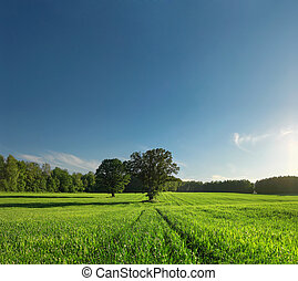 Greenfield, forest and tree with perfect skyline. -...
