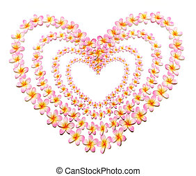 Frangipani Flowers in Heart Shape