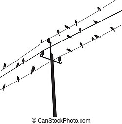 birds - vector birds on electric post