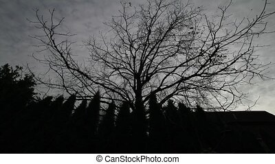 Timelapse on Dark Clouds with Trees
