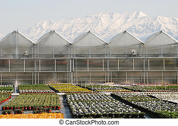 Greenhouses with snow covered mountains.
