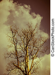 Dead tree against the sky. Sepia style.