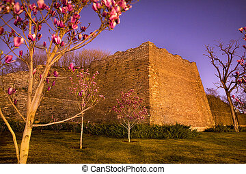 City Wall Park with Pink Magnolias Beijing China