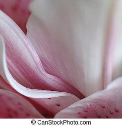 soft pink flower petals
