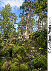 Swedish forest - Natural wild forest. Sweden, Scandinavia