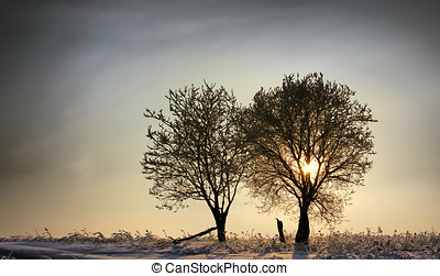 Zachód słońca, Zima, Drzewa, dwa