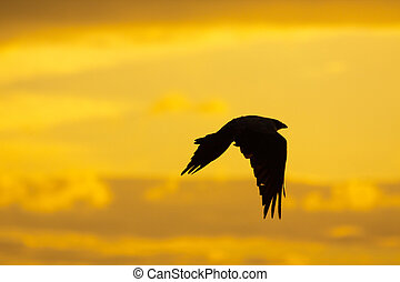 Crow silhoette in the sunset sky