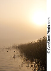 Lake and ducs - Lake and duck in fog