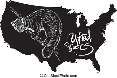 Marten and U.S. outline map. Black and white vector...