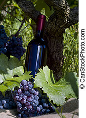 A bottle of red vine, grapes and vineyard - A bottle of red...