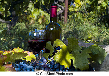 A bottle of red wine in the wineyard
