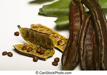 Carob Ceratonia siliqua isolated on white background