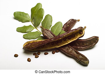 Carob Ceratonia siliqua with leaf