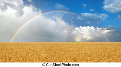 Rainbow Over Wheatfield - Rainbow over wheatfield