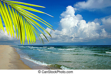 Paradise beach with palm tree and cumulous clouds in the...