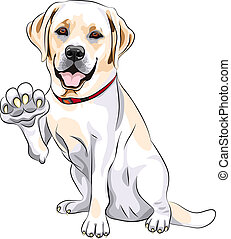 Vector, dog, labrador, retriever, vrolijk, glimlachen,...