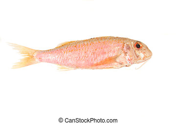 Red Mullet fish isolated on a white background