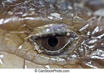 serpiente, ojos, macro