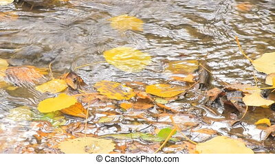 Autumn leaves in water - Autumn Leaves in the srping