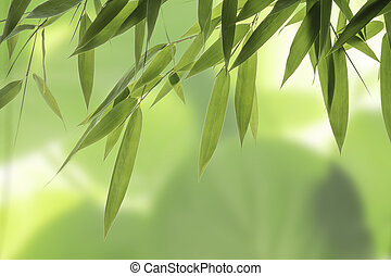 Bamboo leaves - Close up from green Bamboo leaves