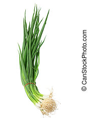 Spring Onions on White Background