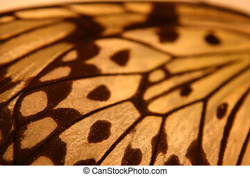 Monarch - A pattern of a monarch butterfly wing
