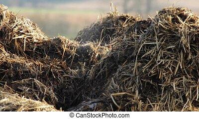 dung heap - damping dung heap