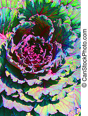 Ornamental Cabbage Plant 2 - An ornamental cabbage plant...