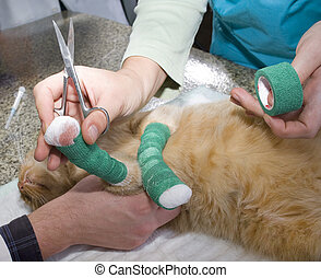 Wounded cat treated by veterinarians