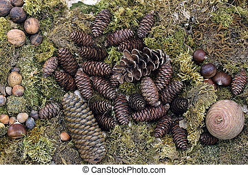 Autumn background with pine cones