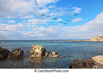 A flock of migratory birds from the Mediterranean coast....