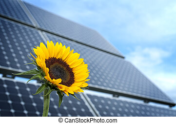 Sunflower with solar panel
