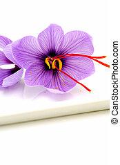 Saffron Flowers - Fresh Saffron flowers known also as Crocus...